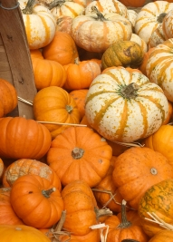 mini pumpkin pile