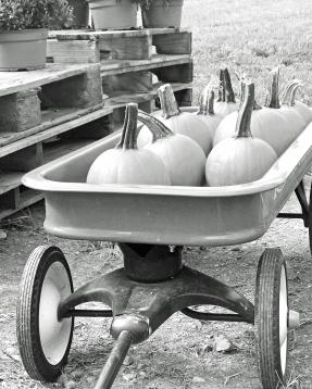 wagon pumpkins